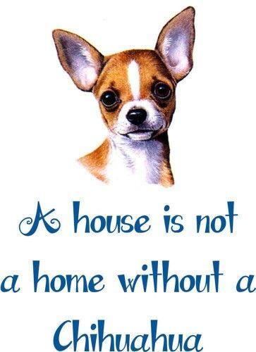 Dog Quotes By Lori Horlacher Cute Chihuahua Chihuahua Chihuahua Puppies
