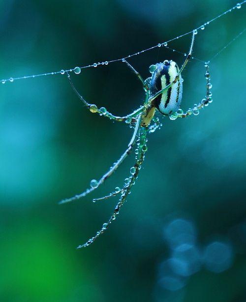 Wilderness: Amazing Animal Photography Showcase - After the rain by YaYa Gonohe