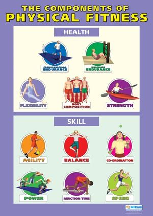 Physical Education Schools Poster The Components Of Physical Fitness