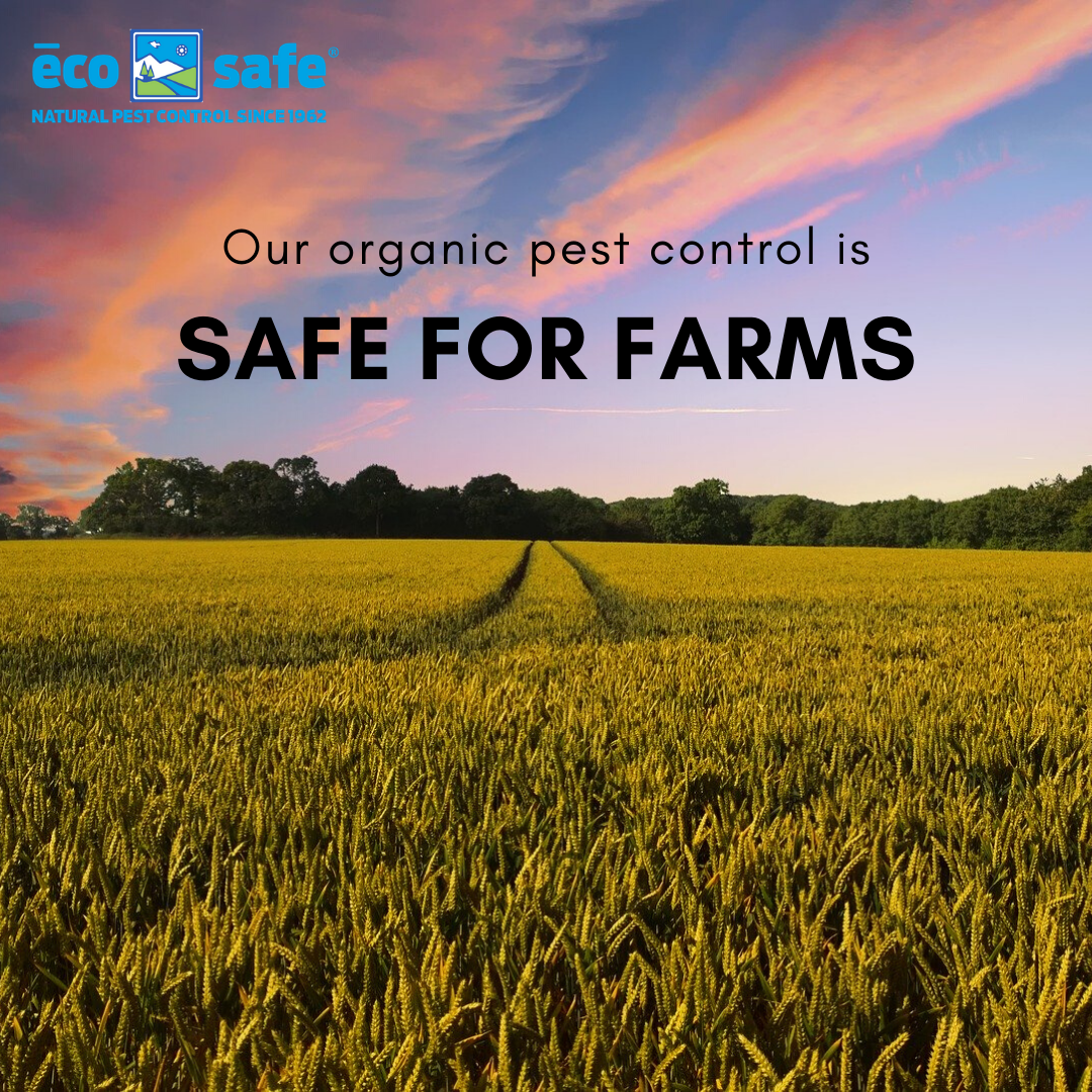 Try our natural organic pest control! #farming #organic #essential #shoplocal #dfw #dallas #fortworth