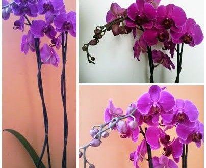 Jak Pielegnowac Storczyki Sposob Na Wszystko Porady Domowe Sposoby Jak Zrobic Plants Garden Glass Vase