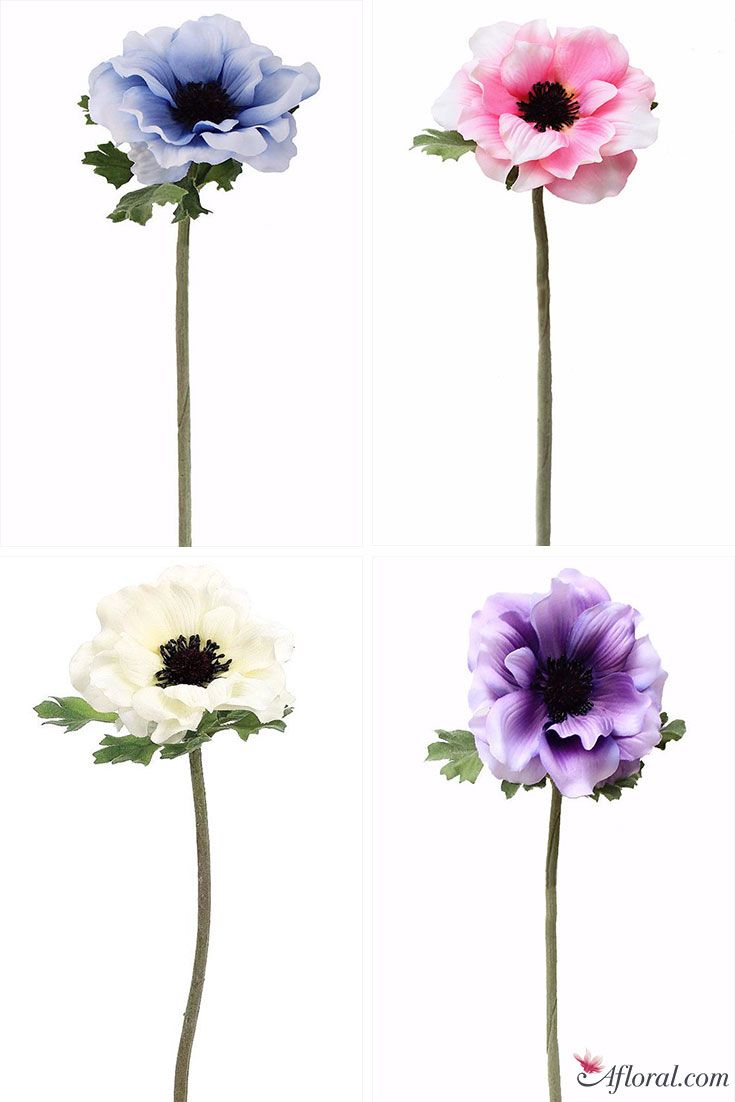 The Anemone Represents Expectation Anticipation And Adds
