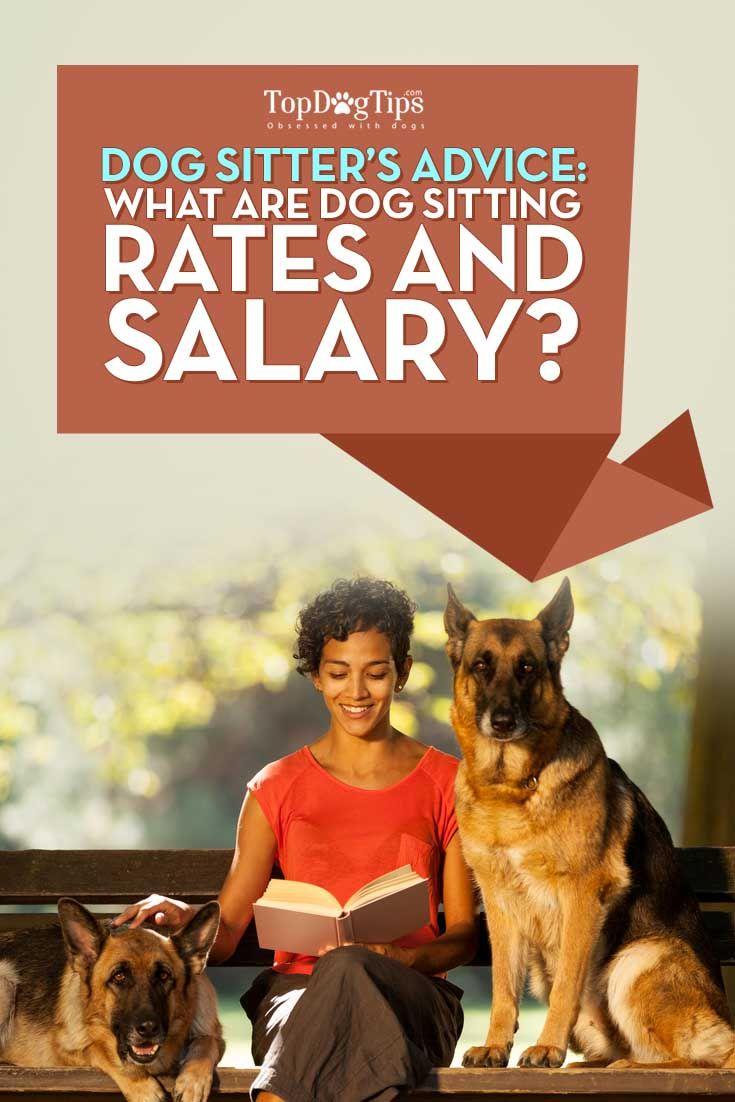 rover dog sitting salary