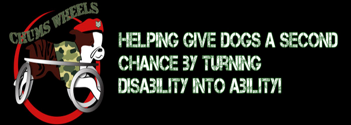 Please check out Chum's Wheels on Facebook helping disabled dogs by giving them wheels to get around. Such a worthy cause.