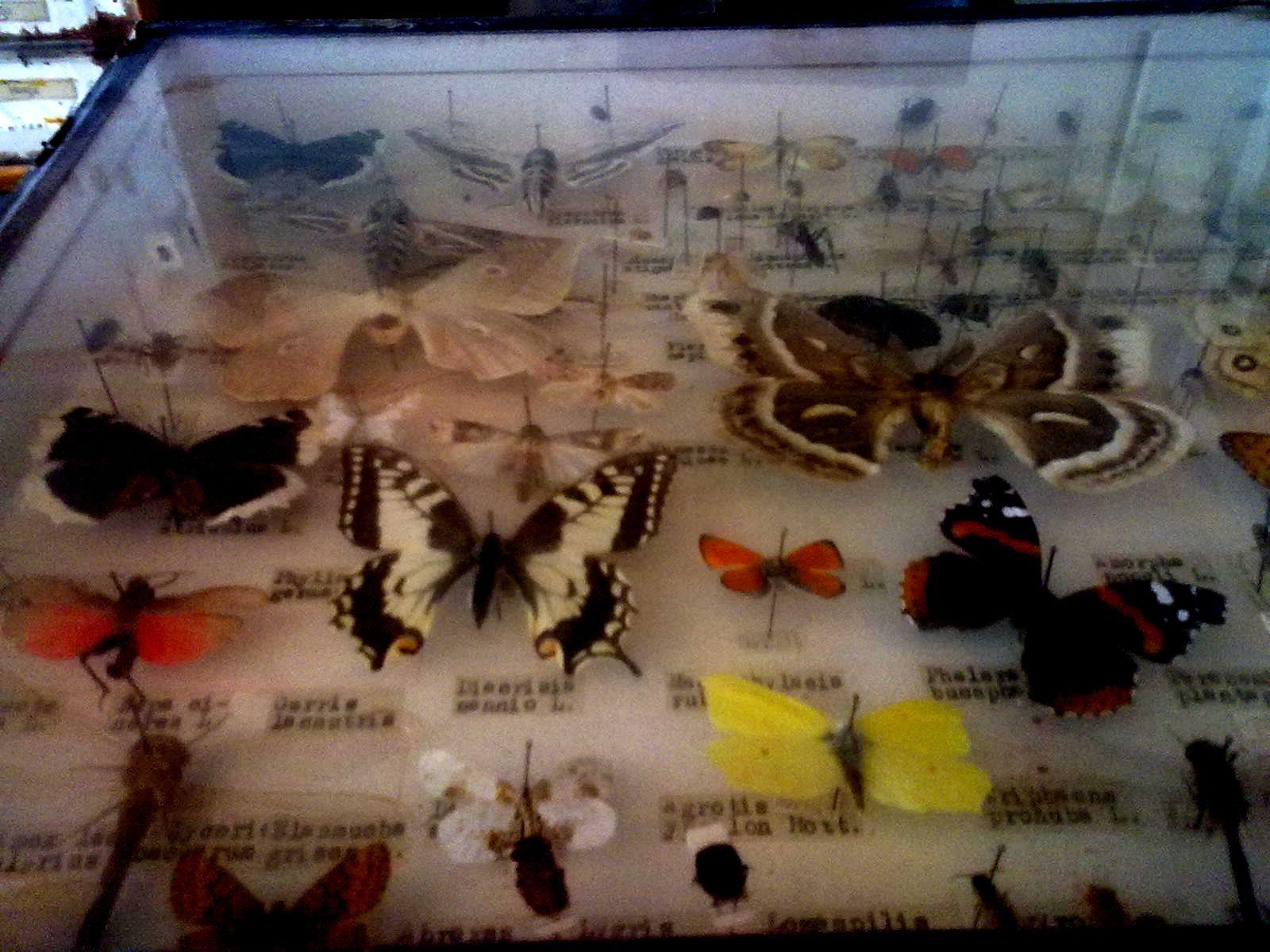 perhoskokoelma