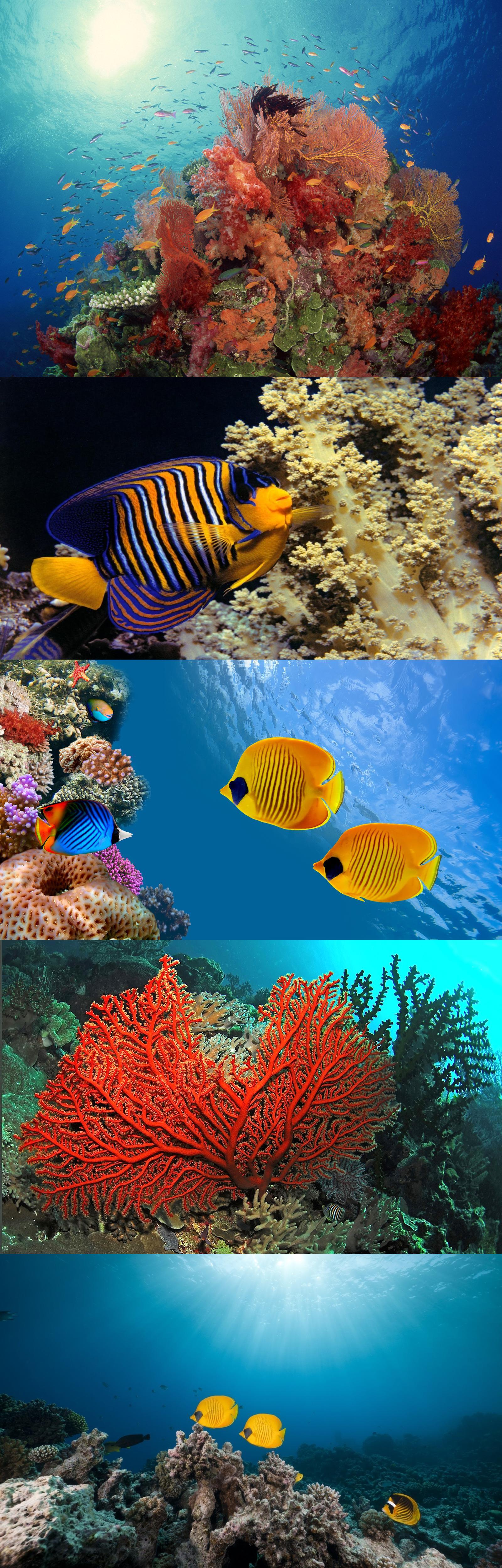 Ocean Corals and Fish
