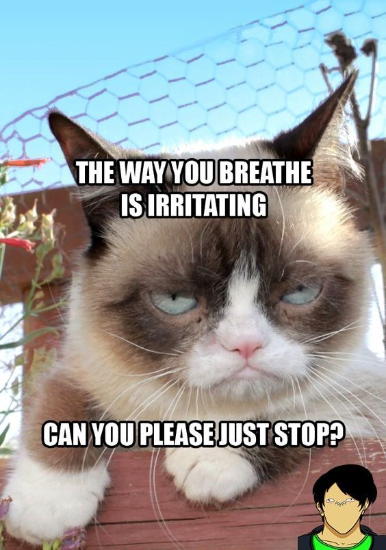 Photo of Top 26 Funny Memes Comebacks Grumpy Cat  #Cat #comebacks #funny #Grumpy #memes