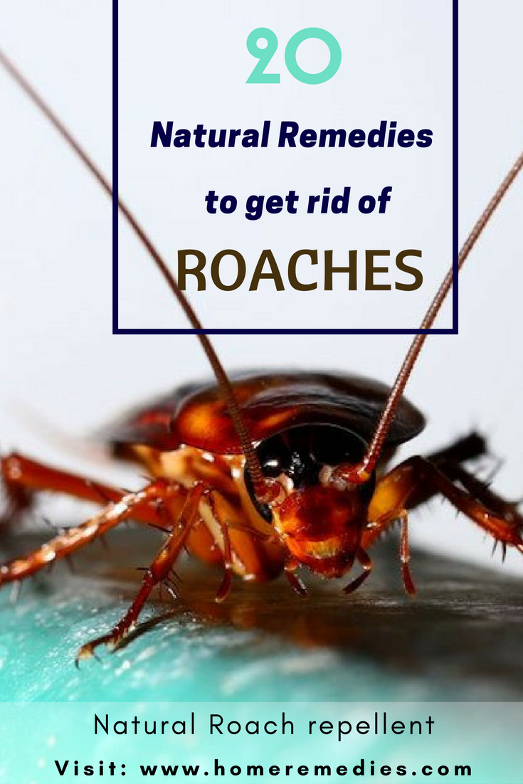 20 Simple Home Remedies To Get Rid Of Roaches Natural Roach Repellent Home Remedies Diy Bug Repellent