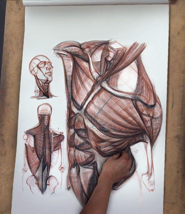3D Anatomy - Gnomon Workshop - Using Knowledge of Anatomy to Create ...
