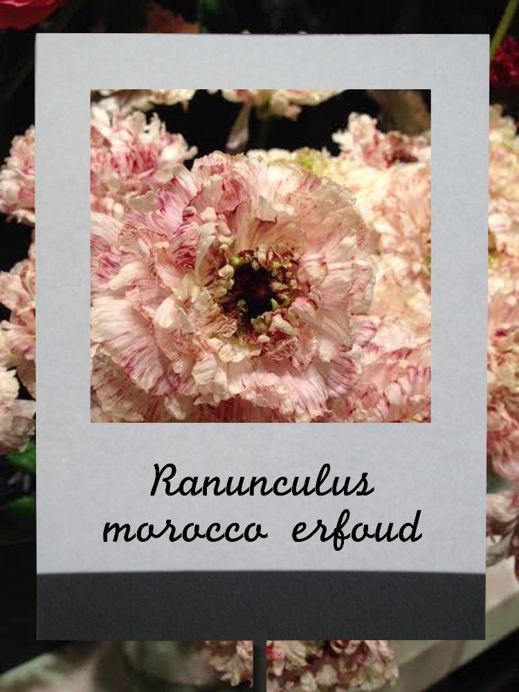 ラナンキュラス(モロッコエルフード) #flower #shop #matilda #中目黒