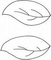 Image Result For Blank Leaf Leaves Template Free Printable