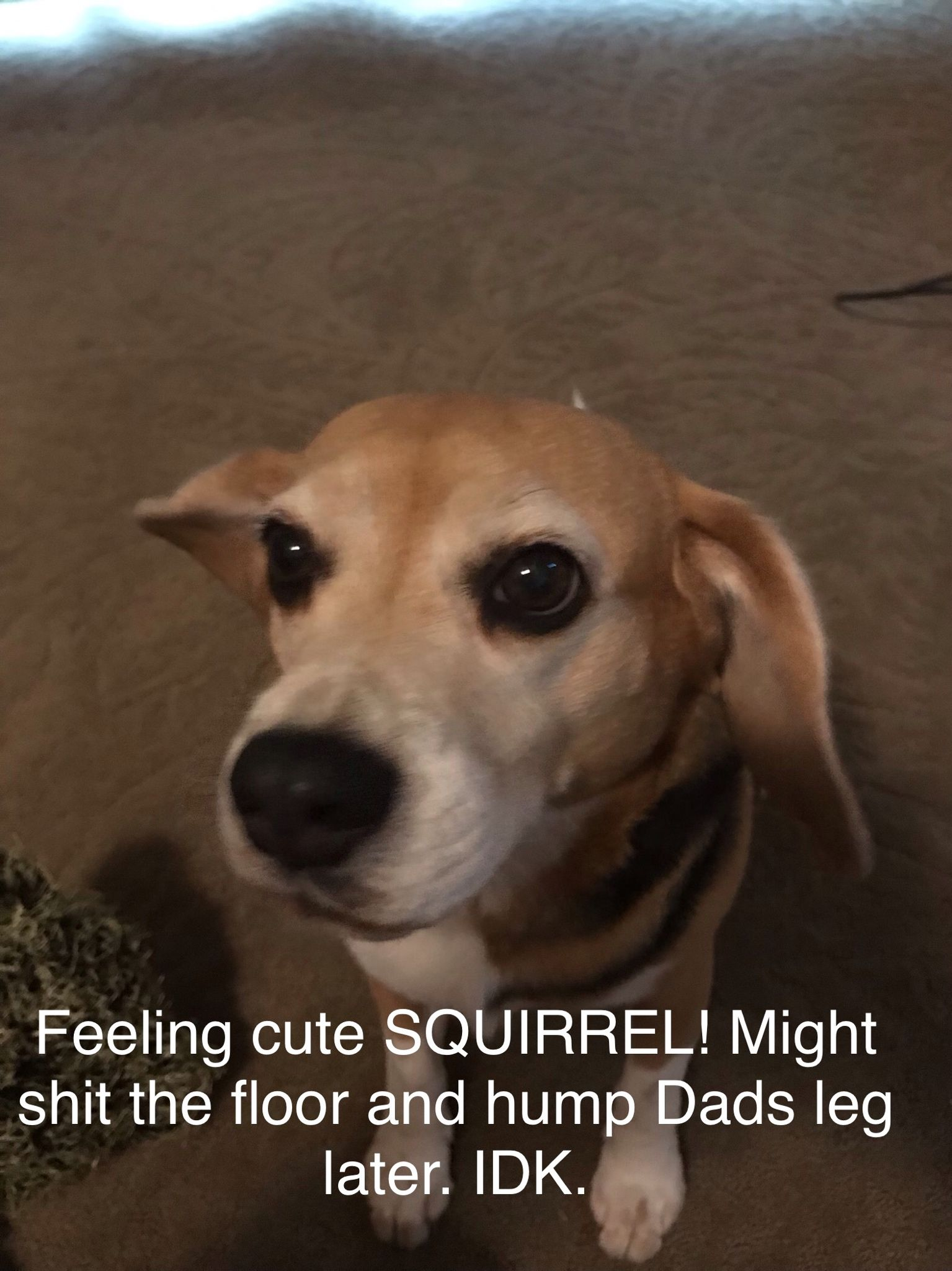 Quail Dog Training With Images Dogs Cute Squirrel