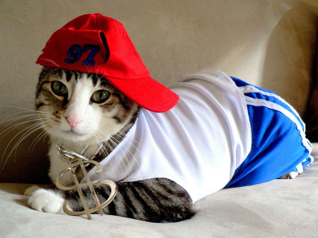 Картинки кошки в кепке
