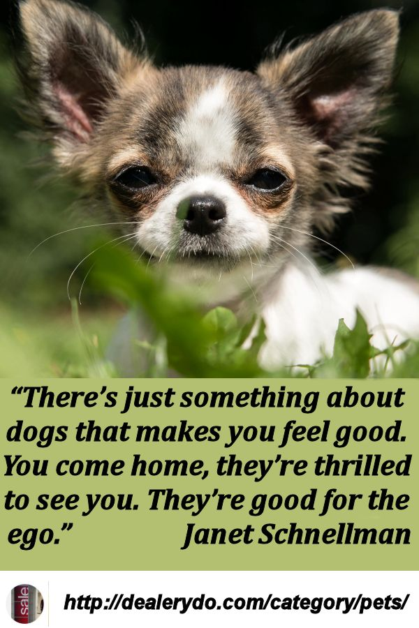 Pets Pets Dogs Funny Dog Pictures