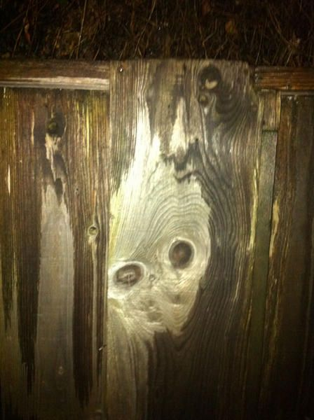 Face in the Fence