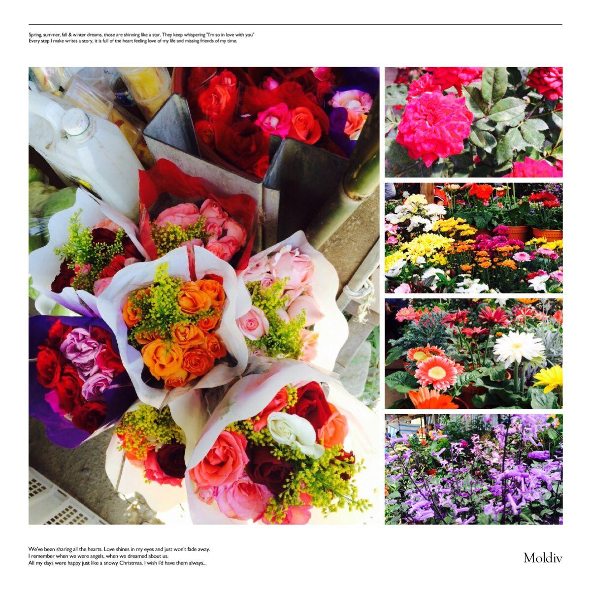 Fresh colorful flowers ~kundasang ranau~ | Sabah | Pinterest