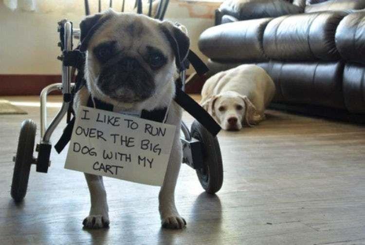 Dog Shaming | Funny Dog Photos