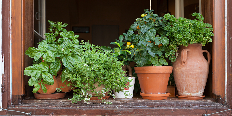 Grow Vegies And Herbs In Your Small Space Bunnings