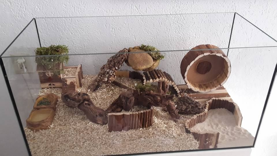 Too Small But With Nice Layout Hamster Pinterest Hamster Cages