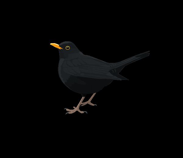 One Illustrated Bird A Week Black Bird Tattoo Black Bird Bird Tattoo Men