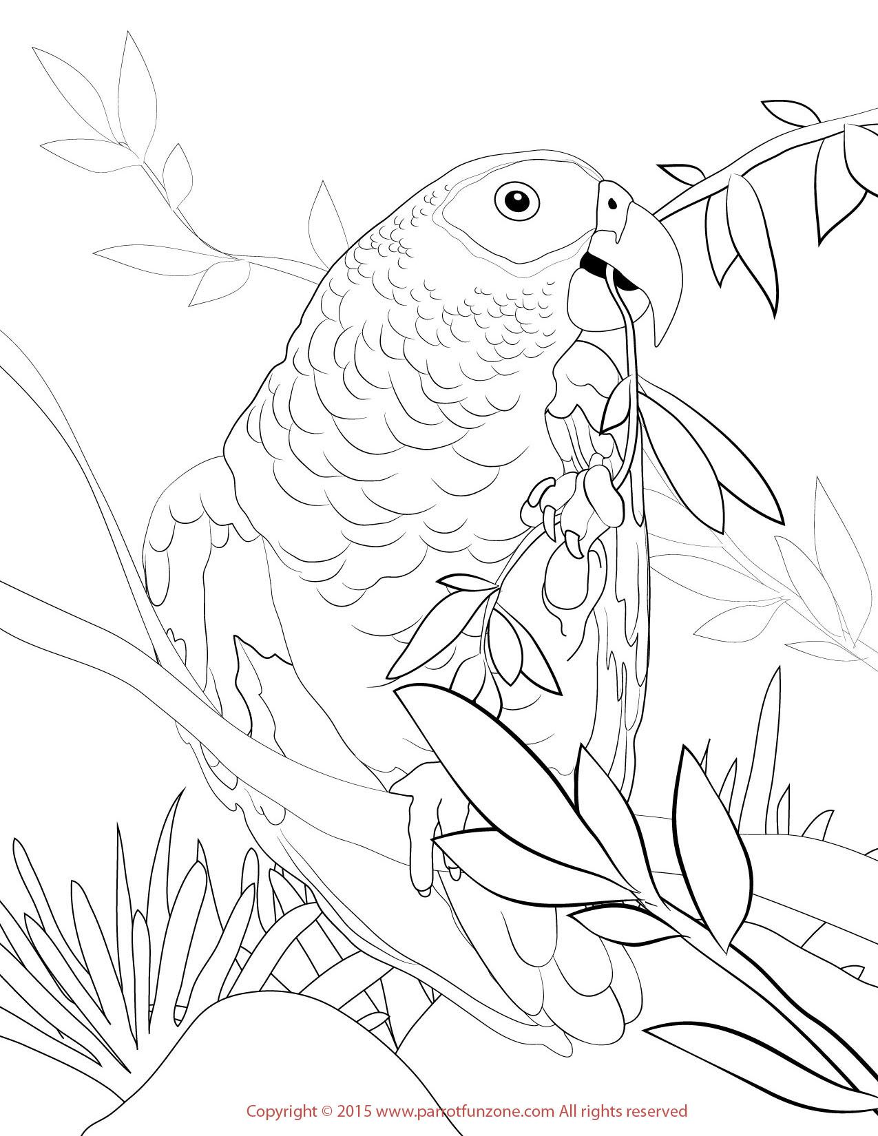 African Grey Coloring Page