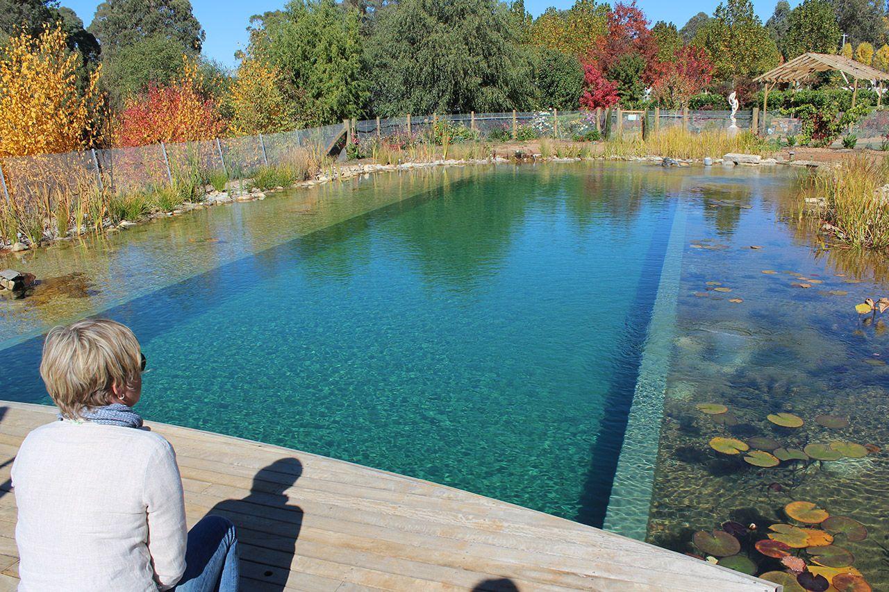 natural pool chemical free | Natural swimming pools, Natural ...