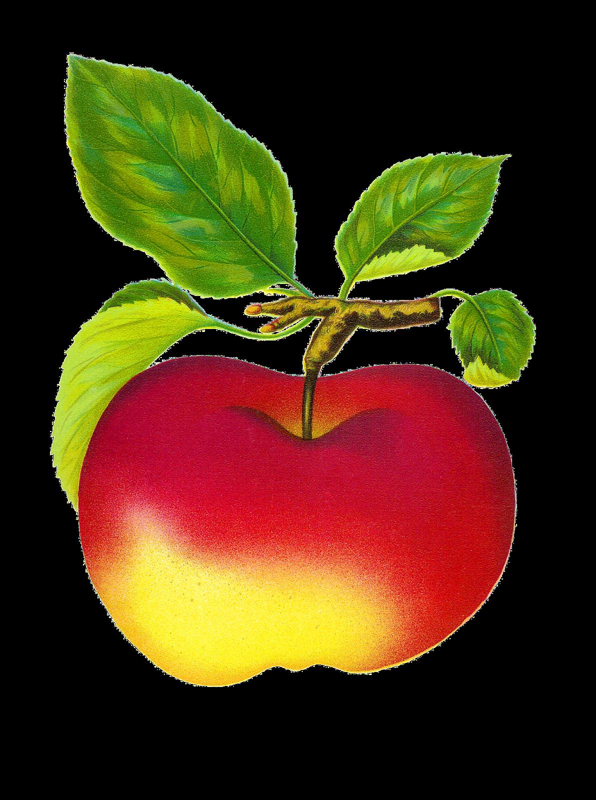 Free Digital Vintage Fruit Red Apple Graphics Beitigheimer