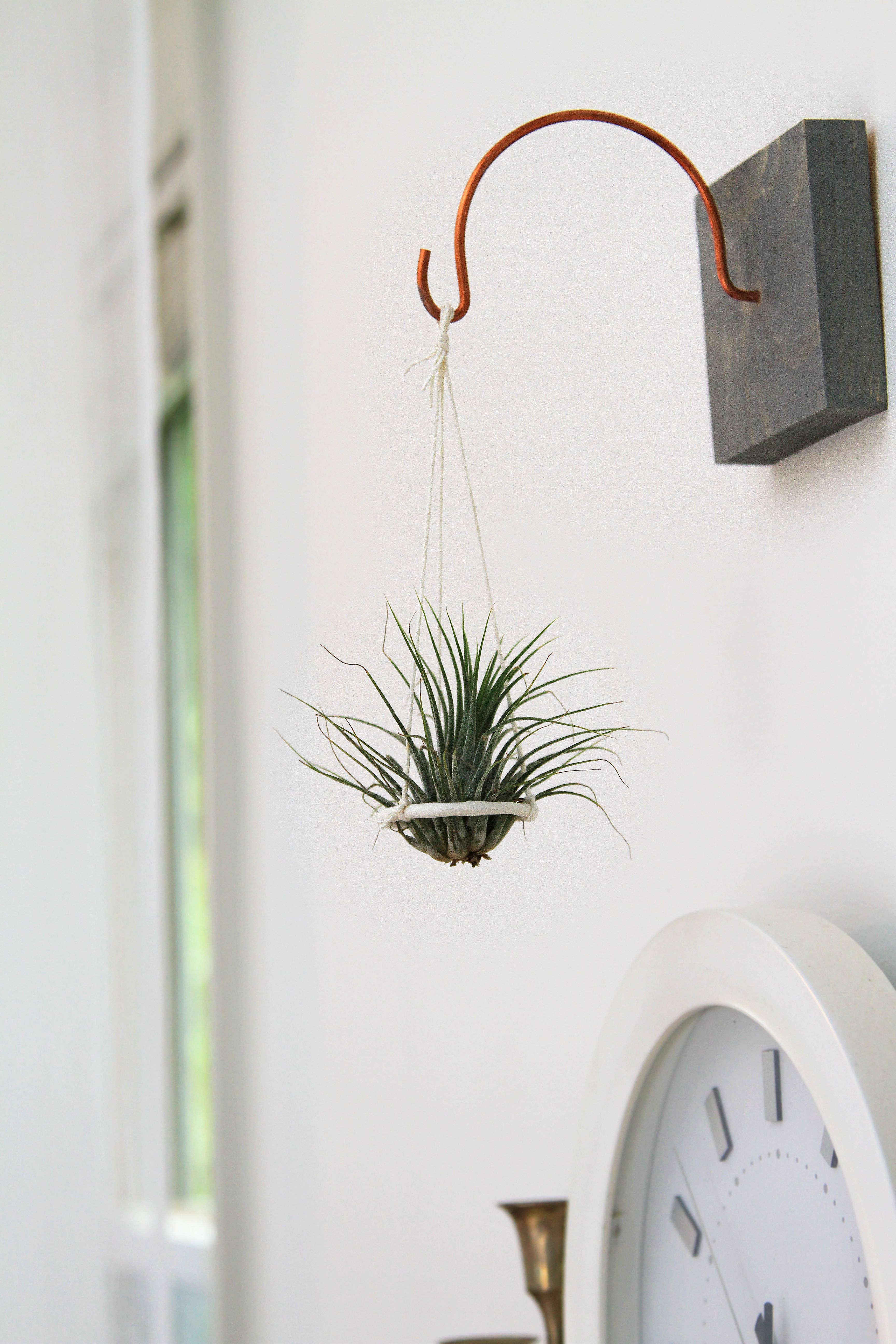 Hanging Air Plant Disc By Gems Of The Soil.
