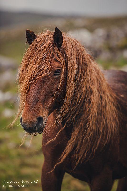 Wild Horses of Bosnia by photographer Carina Maiwald