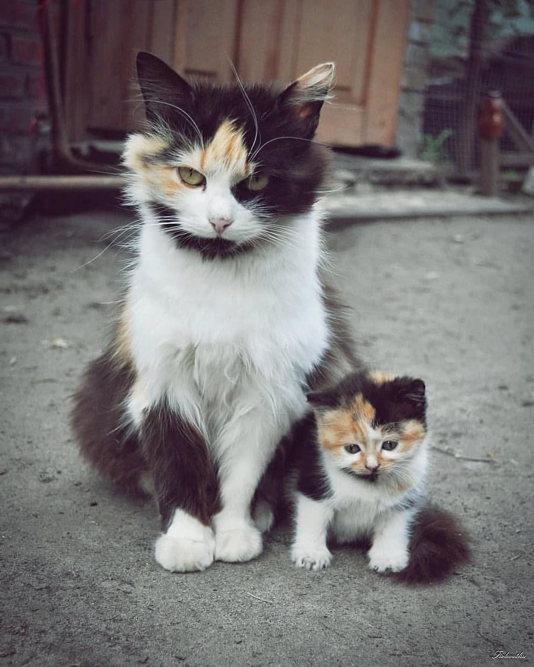 Cat Ideas Diy Cat Care Tips Best Cat Litter Cat Supplies List Cat Stuff Cat Tshirt Cat Ideas Diy Cat Things Cat How Gatos Bonitos Fotos De Gatitos Bebes Gatos