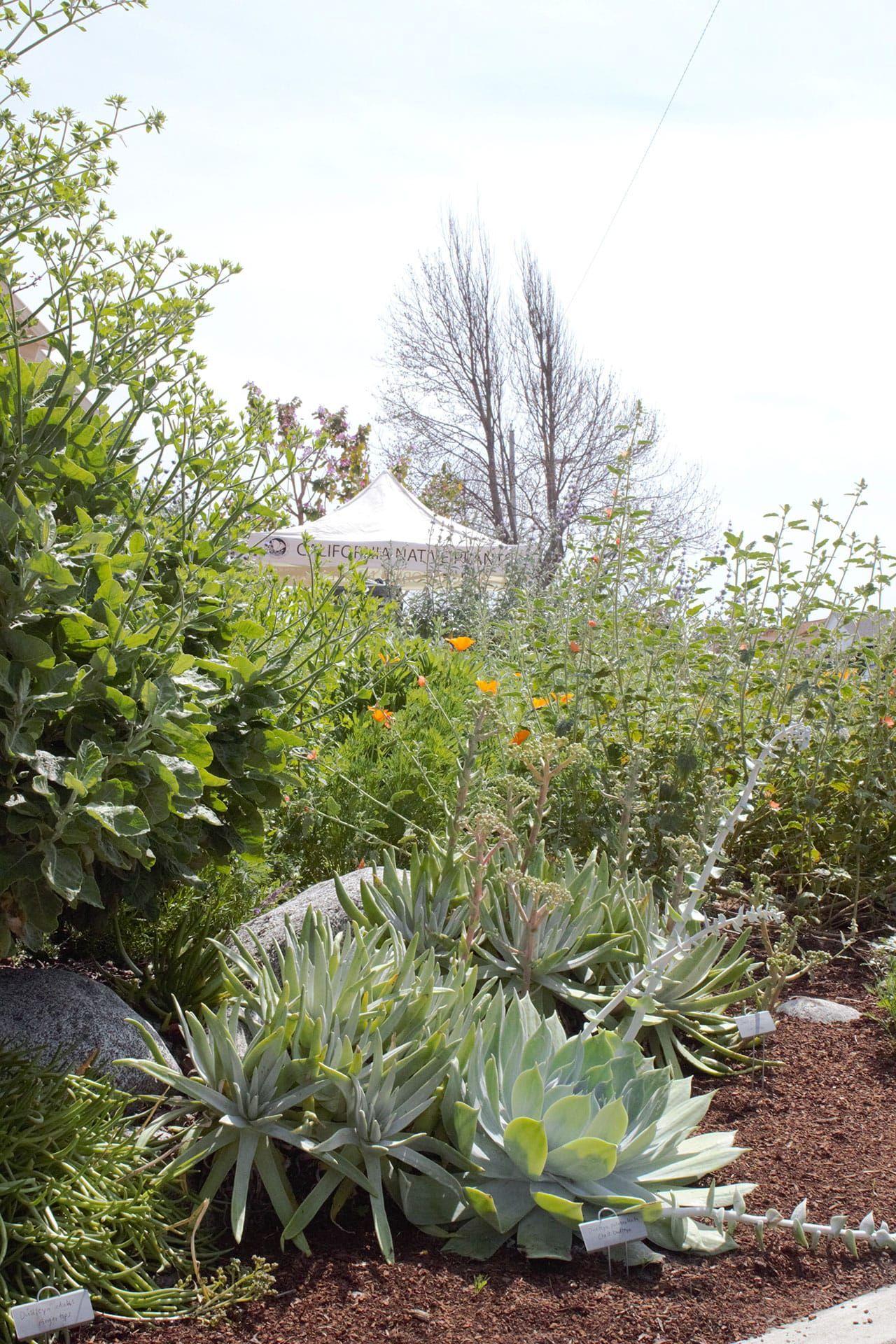 Garden 17 In Torrance | Theodore Payne Native Plant Garden Tour