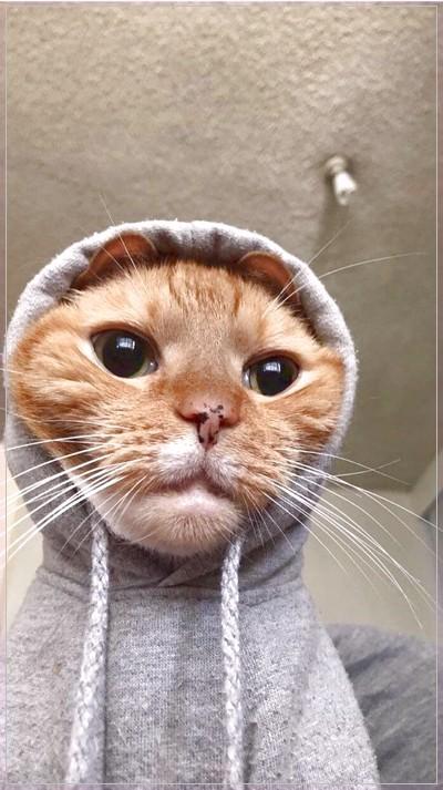 Gambar Kucing Lucu Gambar Kucing Lucu Piaraan Menggambar Kucing