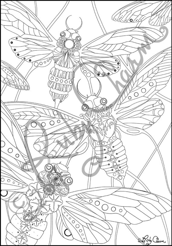 Cicadas Downloadable Printable Adult Coloring Page Ruby Charm