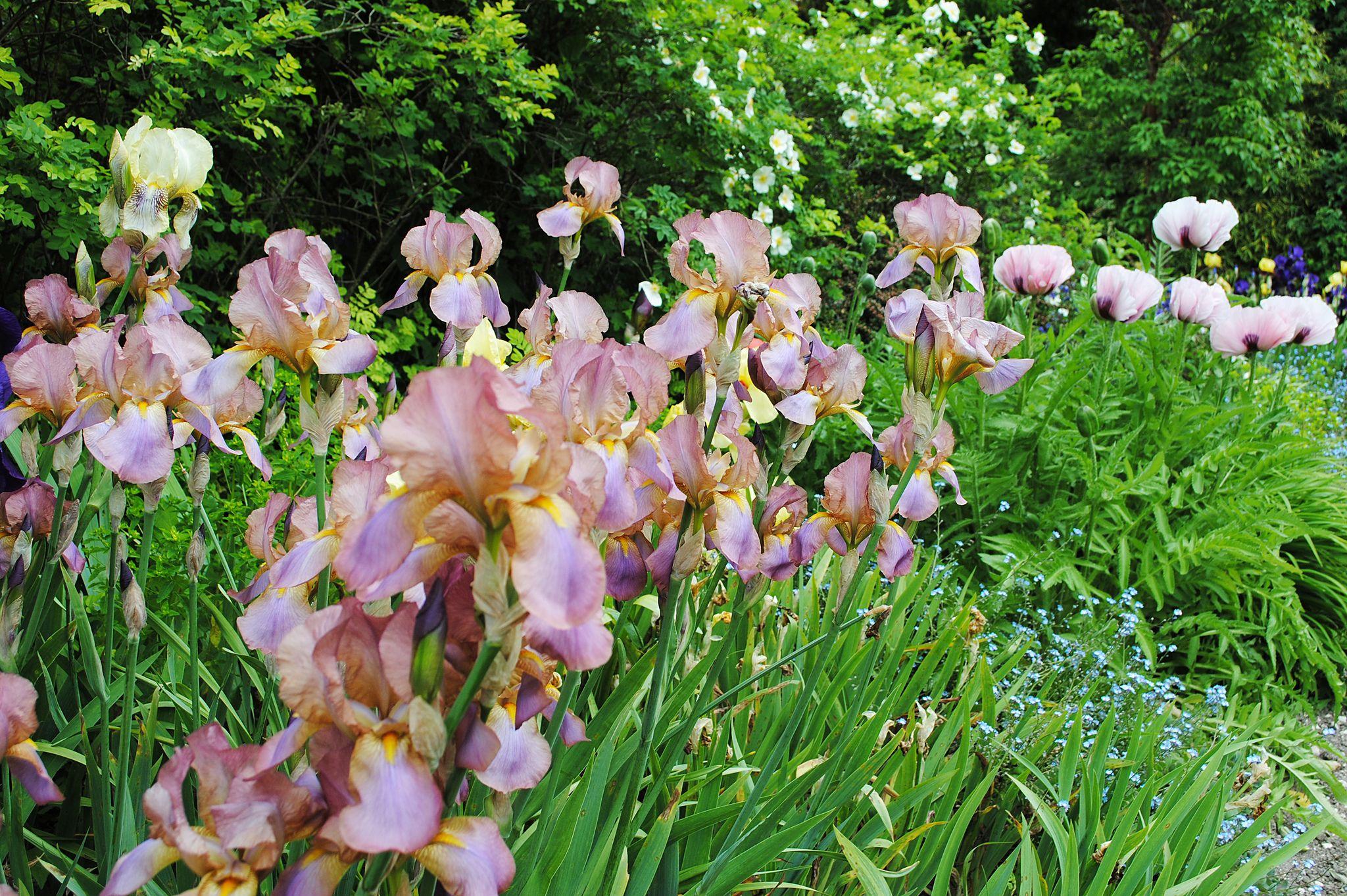 Highdown Gardens - West Sussex   Flickr - Photo Sharing!
