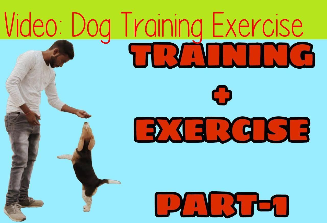 Dog Training Exercise Puppy Training In Hindi Beagle