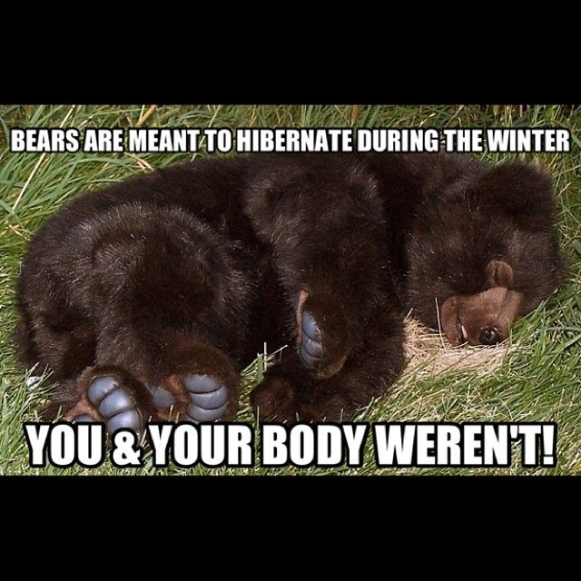 bears are meant to hibernate during the winter you your. Black Bedroom Furniture Sets. Home Design Ideas