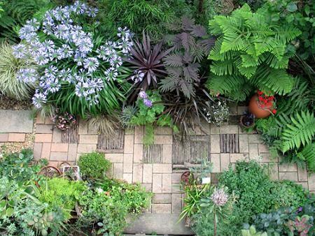 Plantas tropicales para jardin buscar con google for Plantas ornamentales tropicales