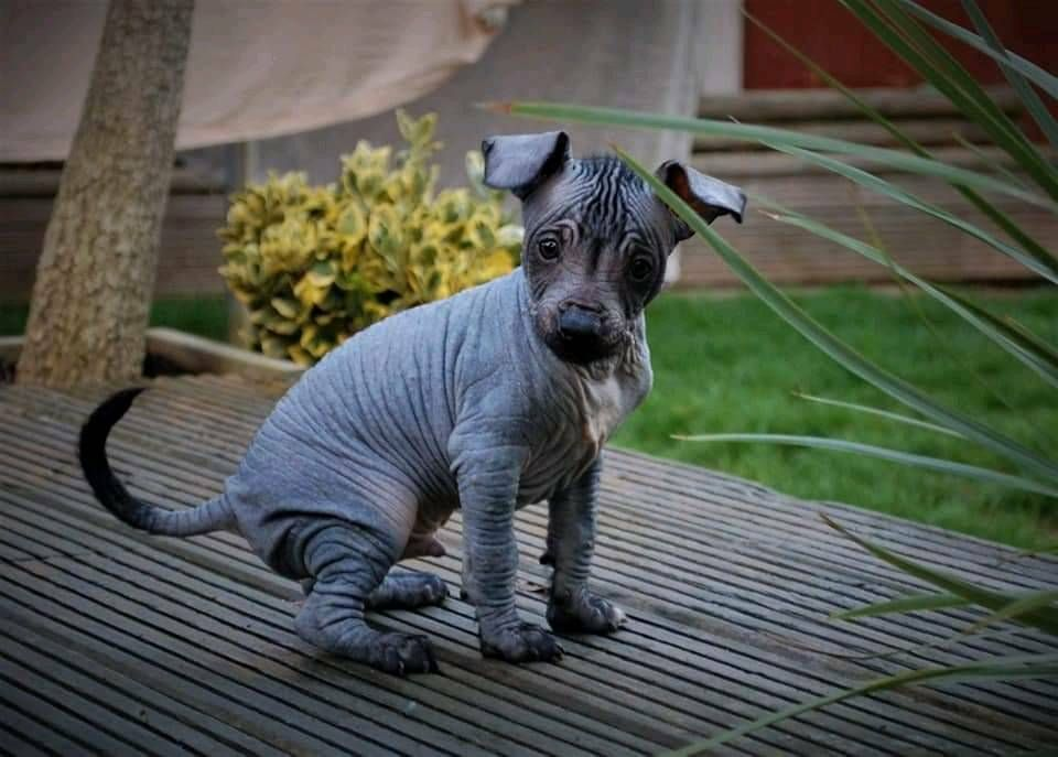 Cute Puppies For Sale Essex Uk In 2020 Puppies For Sale Cute