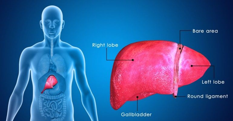 How to keep your liver healthy.