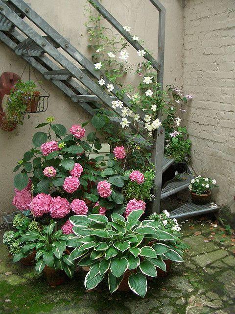 Ten Top Tips For Small Shady Urban Gardens: Hostas, Hydrangeas And Clematis In Pots Create An Urban