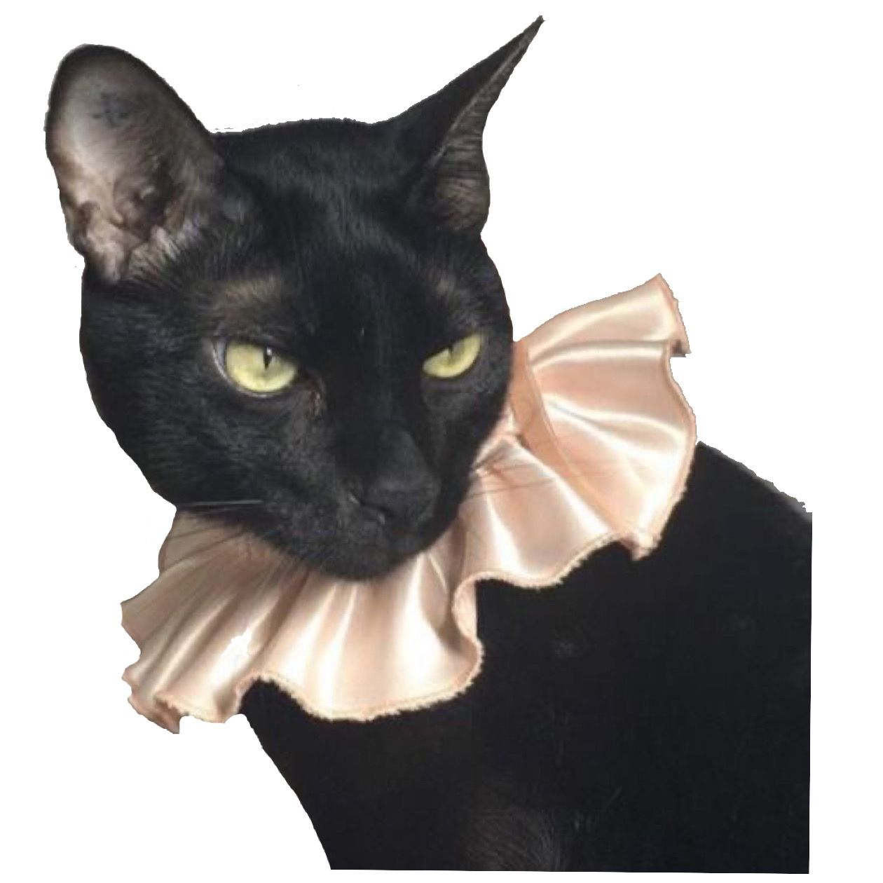 Black Cat Png Art Sketchbook Png Photo And Video