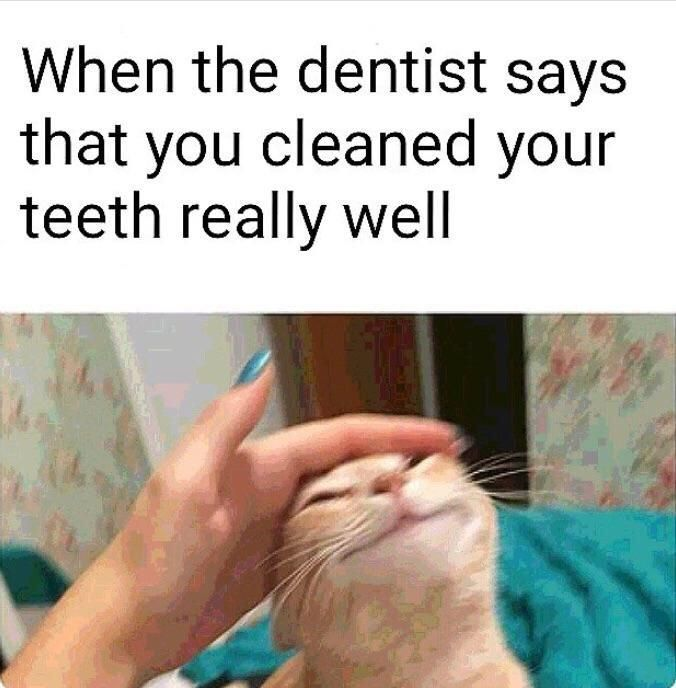 23 Funny Memes So Clean 7 Really Funny Memes Really Funny Laughing So Hard
