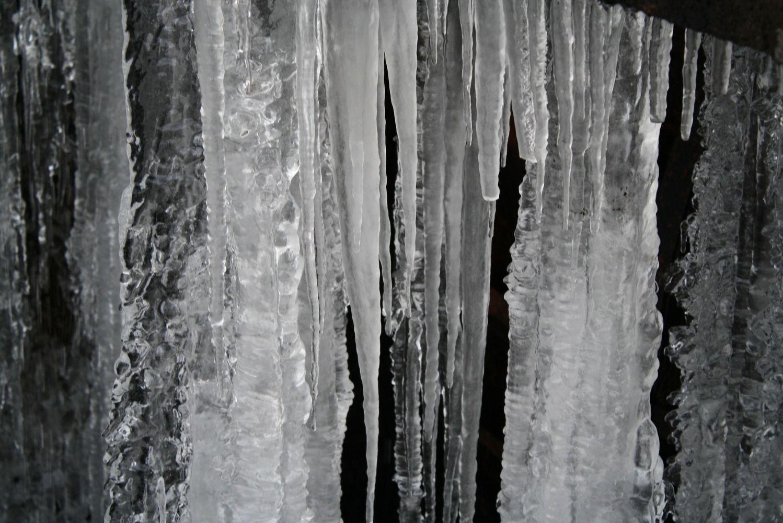 Sonsbeek in de winter