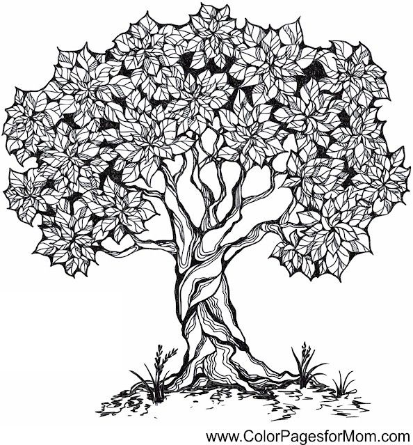 Tree Coloring Page 26 (colorpagesformom) Tree coloring