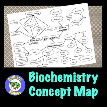 Concept Map Of Macromolecules.Biochemistry Concept Map Macromolecules Enzymes Properties Of