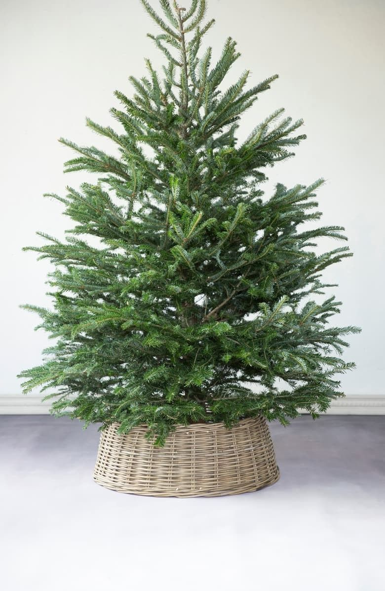 5 Steps to Create Easy Winter Planters Tree collar