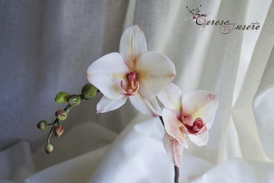 Orchid Teresa Insero