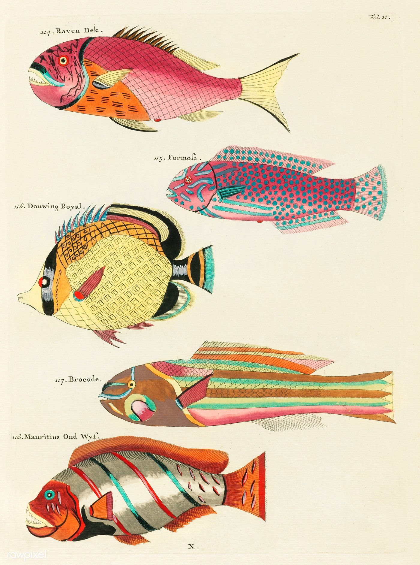 Colourful And Surreal Illustrations Of Fishes Found In Moluccas Indonesia And The East Indies By Louis Renard 1 Fish Illustration Fish Artwork Fish Painting
