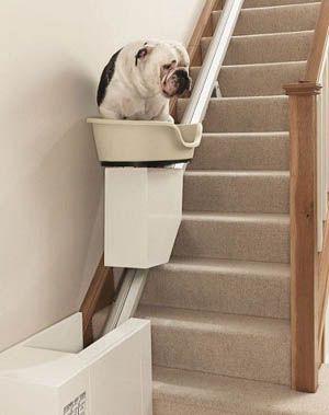 Salvaescaleras para perros freak world pinterest - Escaleras para perros ...