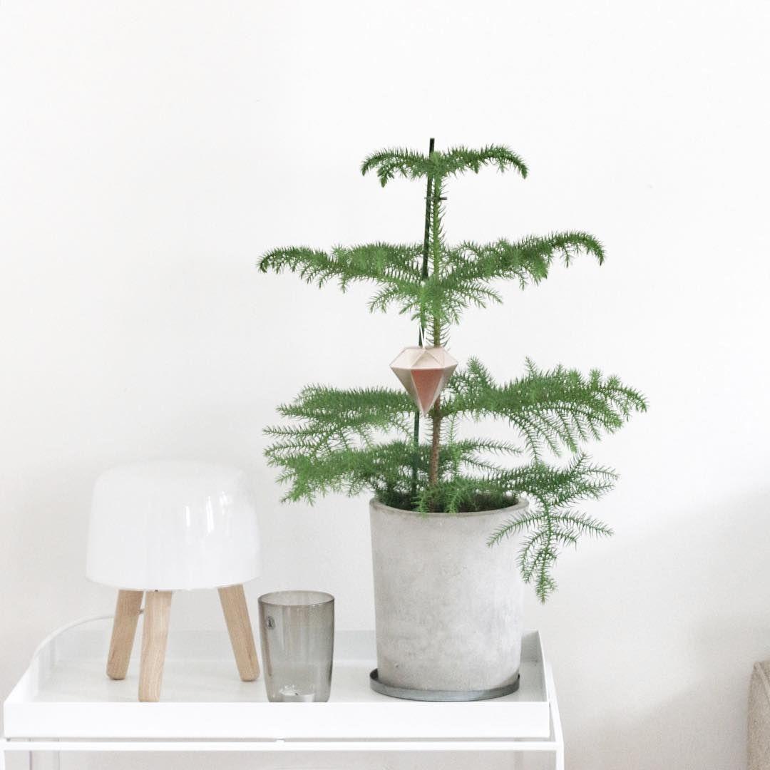zimmertanne mit weihnachtsdiamant einrichten pinterest weihnachten gem tliche weihnachten. Black Bedroom Furniture Sets. Home Design Ideas